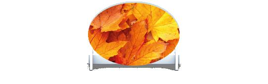 Fillers > Oval Filler > Autumn Leaves