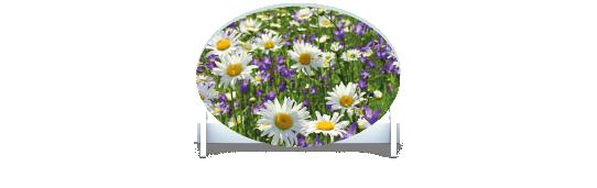 Fillers > Oval Filler > Spring Meadow