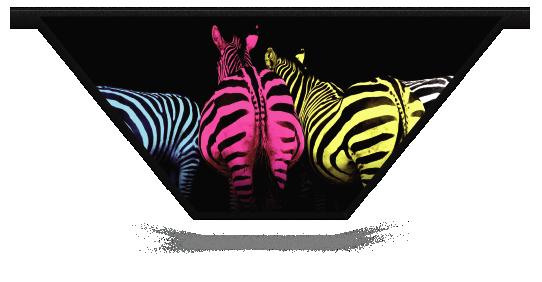 Fillers > V Filler > Colourful Zebras