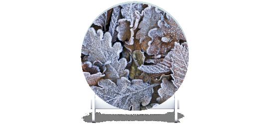 Fillers > Round Filler > Winter Leaves