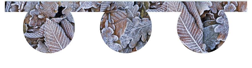 Fillers > O Filler > Winter Leaves