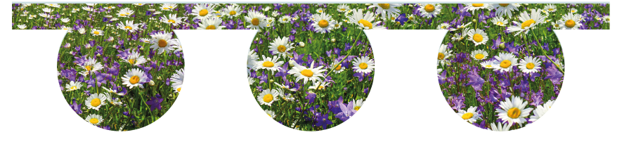 Fillers > O Filler > Spring Meadow